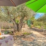 Olive Grove - backyard flora and patio table..